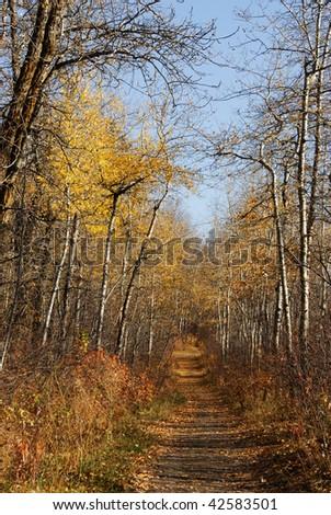 serene winding hiking trail in late autumn forest, north saskatchewan river valley, edmonton, alberta, canada - stock photo