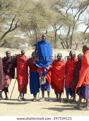 """SERENGETI , TANZANIA - JUNE 20 ;Group of male Maasai performing a  jumping dance on june 20, 2013 Tanzania. This jumping dance is part of a """"coming of age"""" ceremony for Maasai warriors.  - stock photo"""