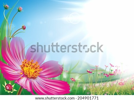 Series of natural backgrounds: wildflowers - stock photo