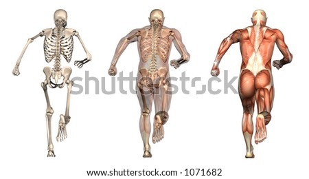 Series of three anatomical 3D renders depicting a man running, viewed from behind. These images will line up exactly, and can be used as overlays to study anatomy. - stock photo