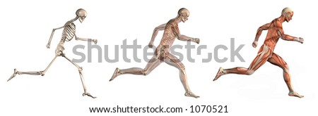 Series of three anatomical 3D renders depicting a man running, viewed from the side. These images will line up exactly, and can be used as overlays to study anatomy. - stock photo