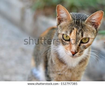Serious cat in garden - stock photo