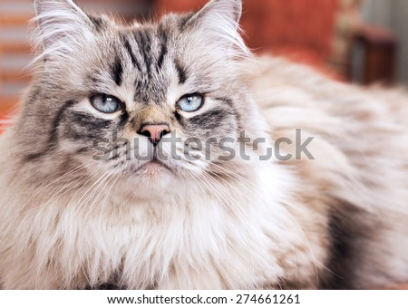 Serious cat is watching you - stock photo