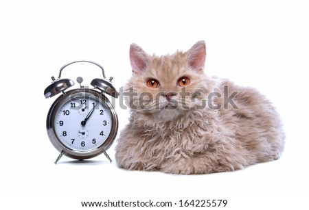 Serious cat with watches are isolated on a white background. - stock photo