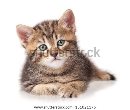 Serious cute kitten isolated on white background cutout - stock photo
