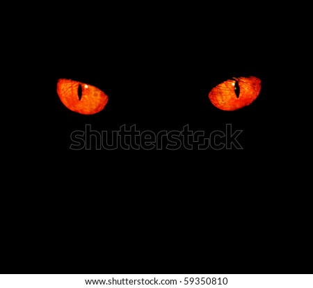 Serious, evil animal eyes stare at something in black, - stock photo