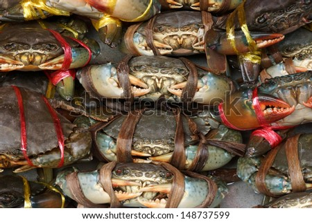 Serrated mud crab (Scylla serrata) tied and row display for sale - stock photo
