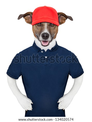 Service dog wearing a blue polo and a red cap