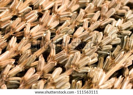 Sesame harvest - stock photo