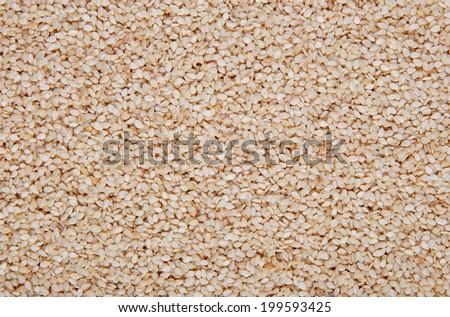 Sesame seeds background - stock photo