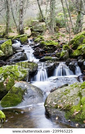 Sestil stream in the Canencia Birch. Sierra de Guadarrama. Madrid. Spain. Europe. - stock photo