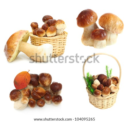 Set Boletus Edulis mushrooms isolated on white background. High resolution.