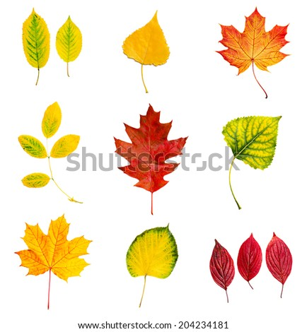 Set collection from many colorful dry autumn leaves, isolated on white - stock photo