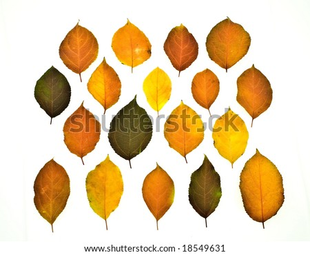 set colorful autumn leaves isolated on white - stock photo