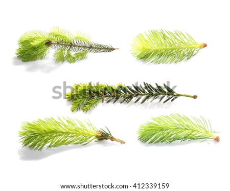 set conifer tree branch isolated on white, close up sprig  with clipping path - stock photo