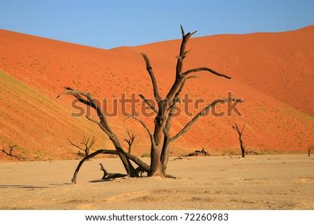Set deep within the dune sea of the Namib desert, Sossusvlei - namibia - stock photo