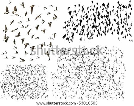 Set flock of birds isolated on a white background - stock photo