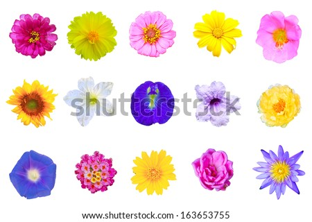 set flowers isolated on white background from Thailand