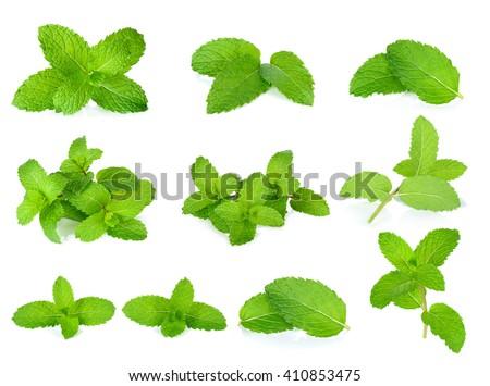 Set Fresh mint isolated on the white background. - stock photo
