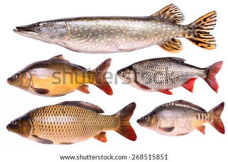 Set Fresh raw fish isolated on white background with clipping path - stock photo