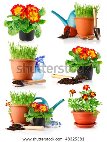 set garden grass and flowers in the pots isolated on white background - stock photo