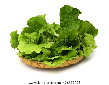 Set green salad leaf isolated - stock photo
