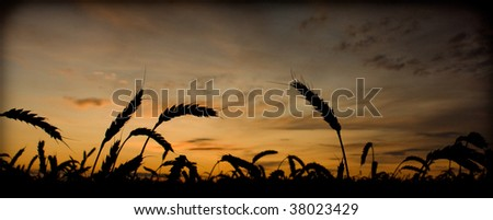 Set in a wheat field - stock photo