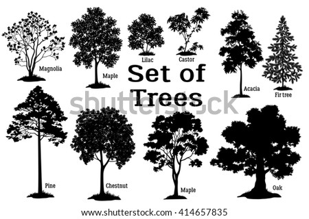 Set Isolated on White Background Silhouettes Spring and Summer Plants, Trees and Bushes, Magnolia, Maple, Lilac, Castor, Acacia, Fir, Pine, Chestnut, Maple, Oak and Grass.