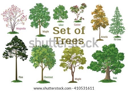 Set Isolated on White Background Spring and Summer Plants, Trees and Bushes, Magnolia, Maple, Lilac, Castor, Acacia, Fir, Pine, Chestnut, Maple, Oak and Green Grass.