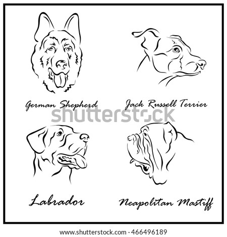set of a illustration shows a dog breeds german shepherd jack russell terrier