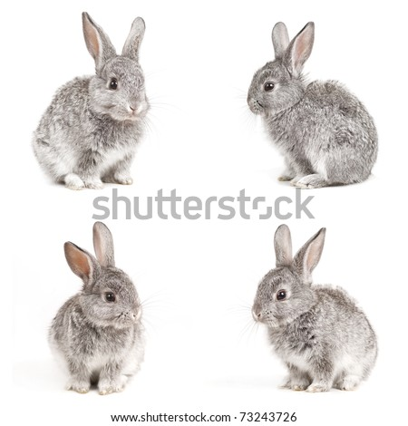 Set of adorable cute rabbits sit on white background - stock photo