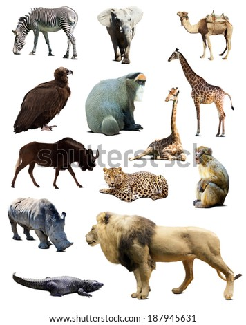 Set of african animals. Isolated over white background  - stock photo