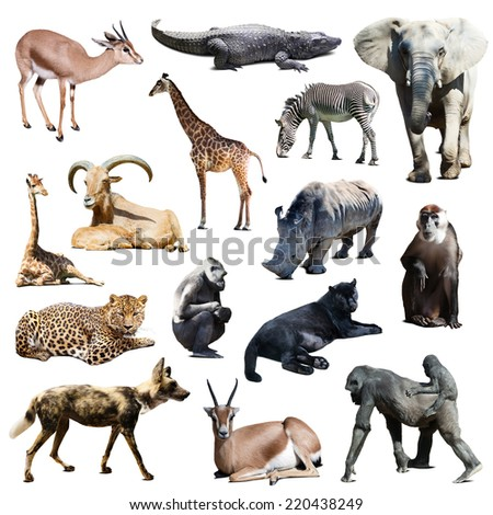 Set of african animals on white background with shade - stock photo
