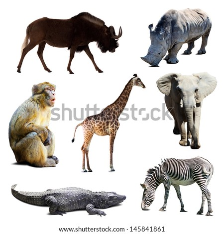 Set of african animals over white background - stock photo