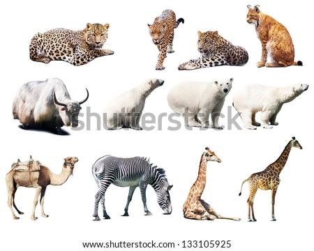 Set of  animals. Isolated over white background - stock photo