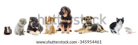 set of animals on a white background isolated