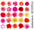 Set of 25 assortment roses - stock photo