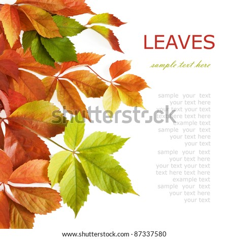 Set of autumn leaves (maple, wild grapes leaf, poplar leaf, oak leaf, chestnut tree leaf, rowan leaf, aspen leaf) isolated on white - stock photo