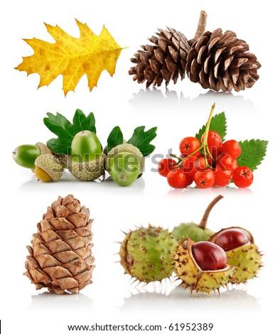 set of autumn nature elements isolated on white background - stock photo