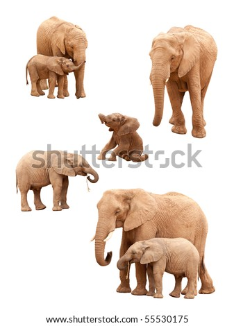 Set of Baby and Adult Elephants Isolated on a White Background. - stock photo