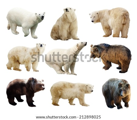 Set of bears. Isolated over white background - stock photo