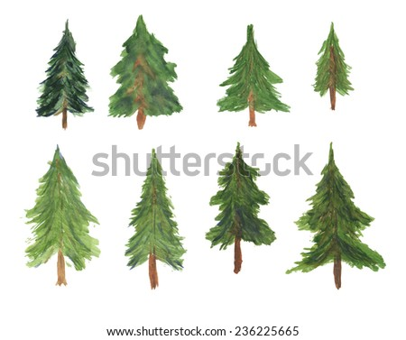 Set of beautiful spruces painted watercolor. Can be used for Christmas design or drawing coniferous forests.  - stock photo