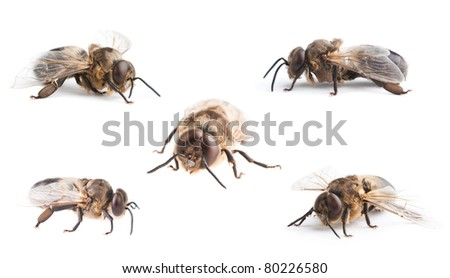 set of bee, isolated on white - stock photo