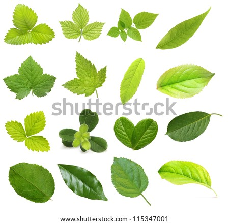Set of berry and fruit leaves isolated on white background - stock photo