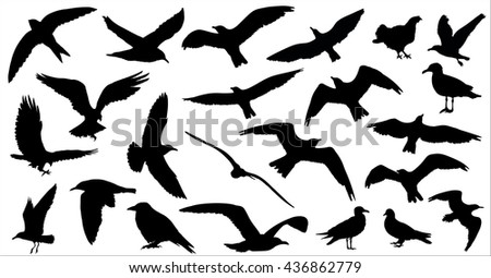 Set of birds silhouettes 23 in 1 on white background - stock photo