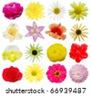 Set of botanical spring flowers - stock photo