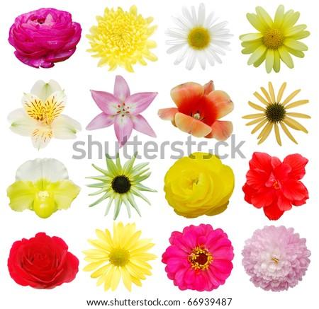 Set of botanical spring flowers - stock photo