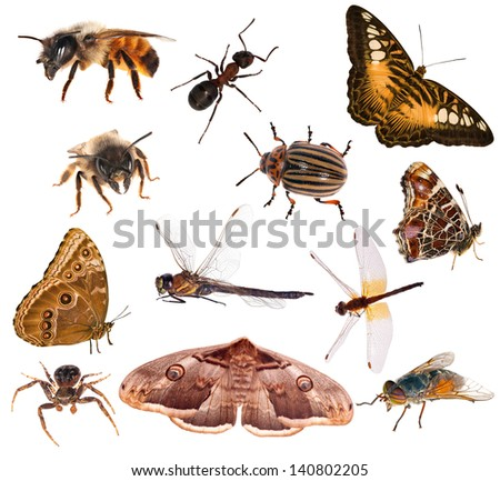 set of brown color insects isolated on white background - stock photo