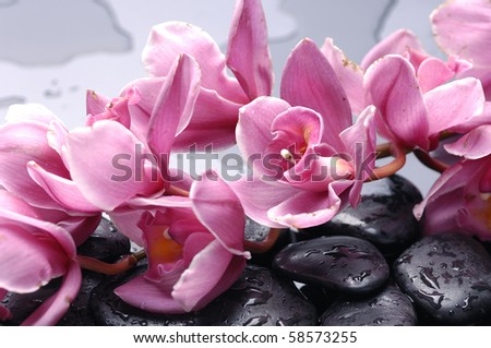 Set of cattleya orchid flower and stone with water drops - stock photo