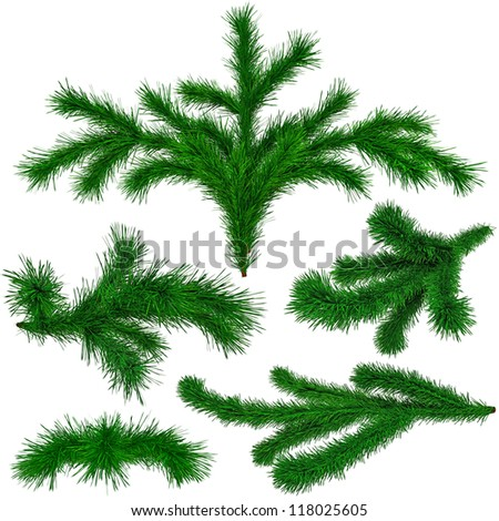 set of Christmas green fir-tree branches on white background - stock photo